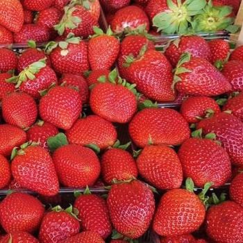jahoda jahody cerstve ovoce